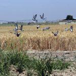 ایجاد ۱۵هزار فرصت شغلی جدید در گام دوم طرح ۵۵۰هزارهکتاری در خوزستان