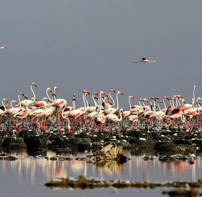 مدیرکل حفاظت محیط زیست استان خبر داد:افزایش ۱۰ درصدی تنوع زیستی در تالابهای خوزستان