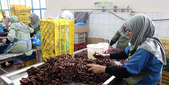 صدور ۲۴ موافقت اصولی و جواز تاسیس طرحهای کشاورزی در خوزستان