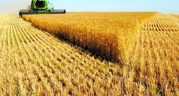 مدیرکل اداره غله و خدمات بازرگانی خوزستان : تأمین نان ۱۹ میلیون ایرانی توسط گندم خوزستان